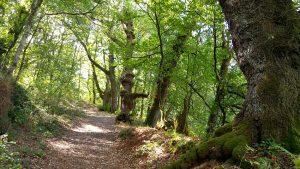 fraga catasós bosque lalín